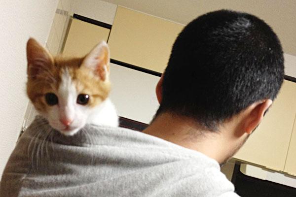 cat_raoh