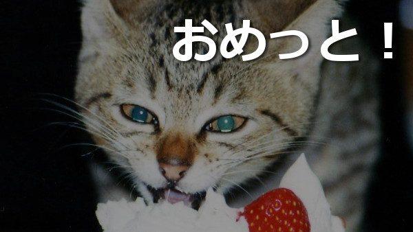 猫,ケーキ,おめっと