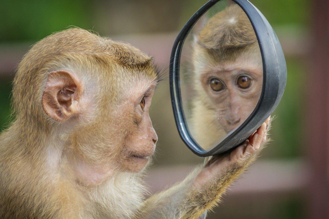 猿のミラーリング