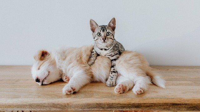 ペットと家(寝そべる犬とびっくり顔の猫)